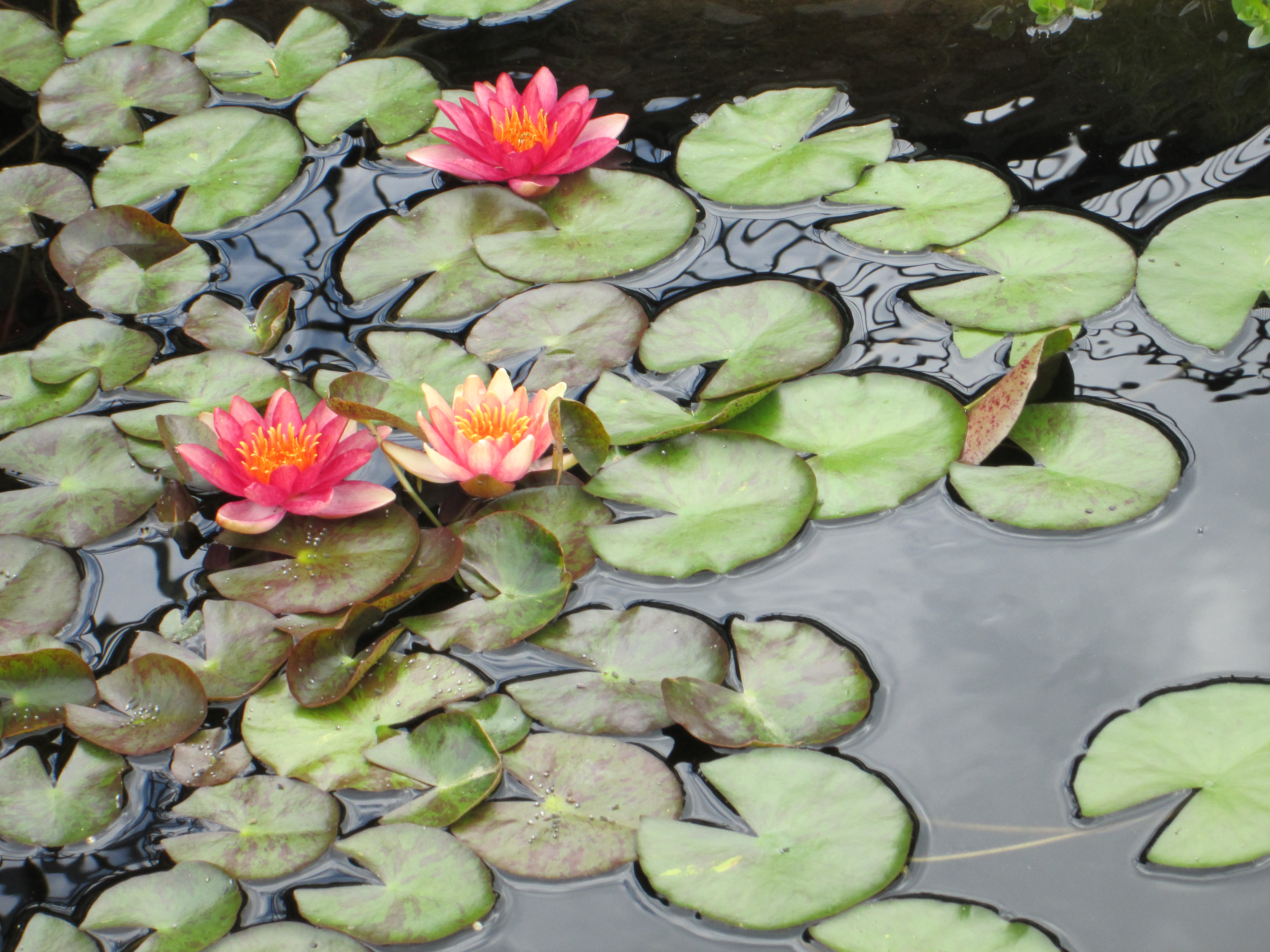 Id Like To Float A Baby On One Of These Giant Lily Pads Miriams